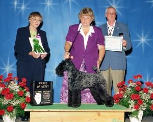 wHonour Award of Merit 2