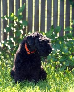 Orange Puppy